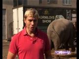 В Твери пройдет «Карнавал слонов»