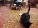 Горностай играет с котенком.