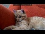 «Мой кот)» под музыку Дорога домой - Дороги, дороги снова дурманят, каждая манит, зовёт за собой, дороги, дороги, если б вы знали, как моё сердце рвётся домой!. Picrolla